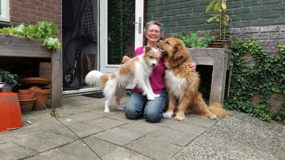 Hersenwerk, Hondenspiegel